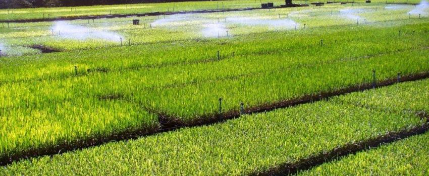 Secretaria de Agricultura promove encontro sobre Estatísticas Agropecuárias