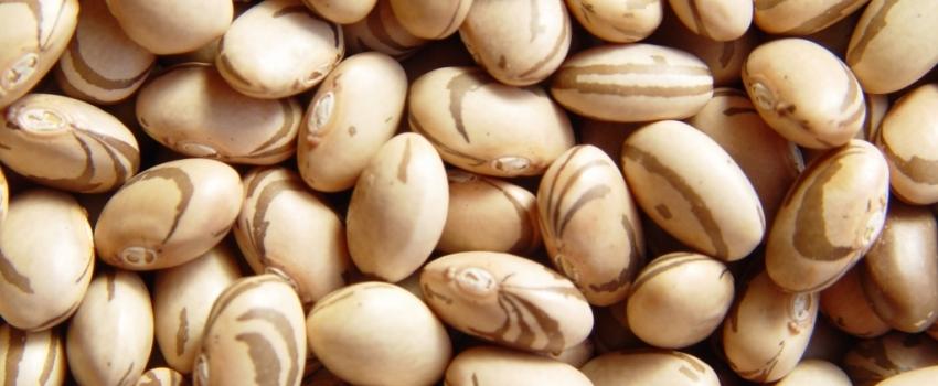 Previsão de Safra: Produção de grãos deve superar sete milhões de toneladas, volume ligeiramente superior a 2018, aponta IEA