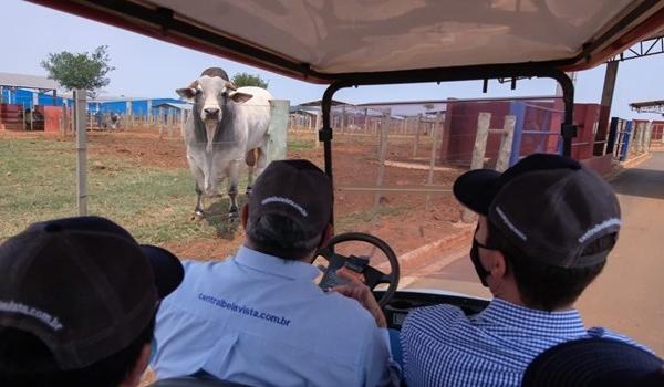 Secretário de Agricultura visita fazenda de coleta e armazenamento de sêmen de touros, que mantém parceria com o Instituto de Zootecnia
