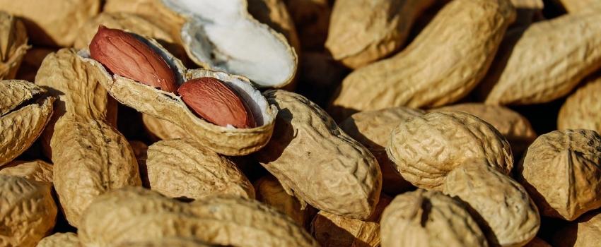 Ital levanta pontos críticos de contaminação por micotoxinas em café, amendoim e cana-de-açúcar para prevenir e reduzir riscos